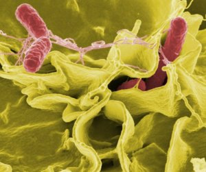 Protect Against Salmonella Restrooms